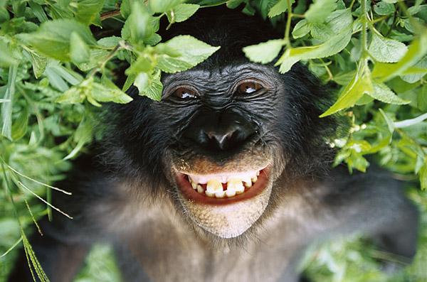 Chimpanzee fucking, free pornsites hardcore